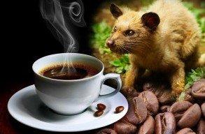 Кофе для гурманов: самый дорогой сорт в мире
